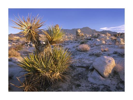 tim-fitzharris-mojave-yucca-in-rocky-landscape-mojave-national-preserve-california