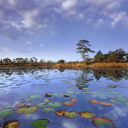 tim-fitzharris-pond-lilies-jonathan-dickinson-state-park-florida-usa