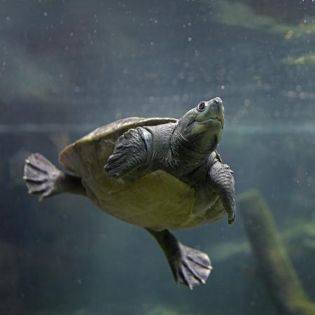 tim-fitzharris-portrait-of-a-giant-asian-pond-turtle-singapore