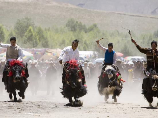 tim-hughes-yak-racing-at-gyantse-horse-racing-festival