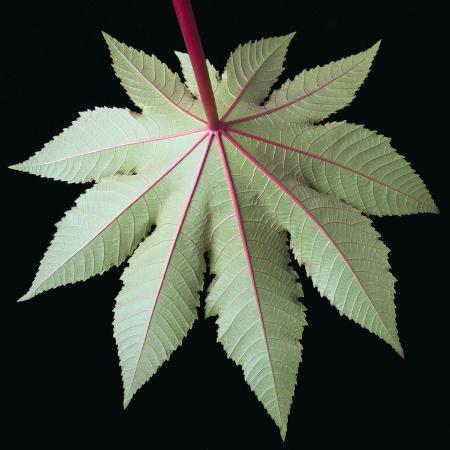 tim-mcguire-leaf-and-stem
