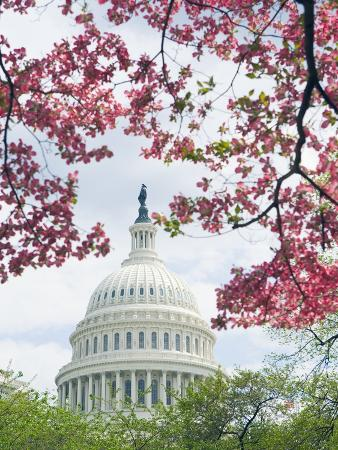 tim-mcguire-united-states-capitol-dome-in-washington-d-c-and-flowering-spring-trees