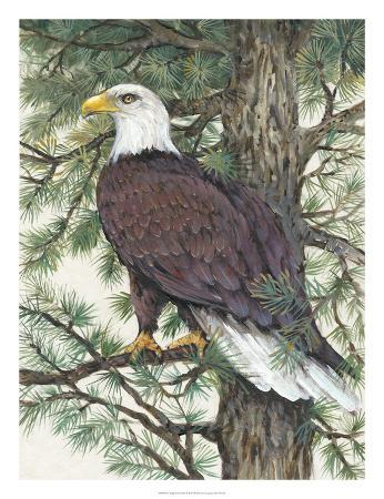 tim-o-toole-eagle-in-the-pine