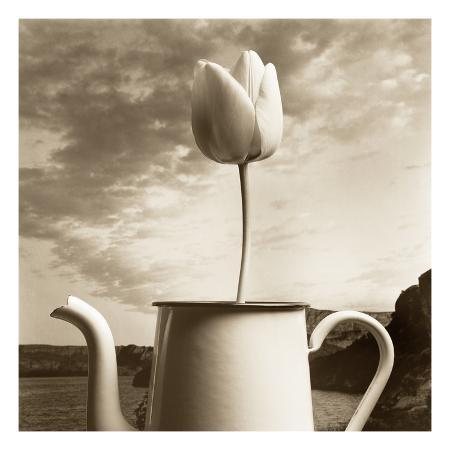 tm-photography-tulip-teapot