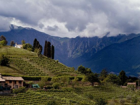 todd-gipstein-farmhouse-on-a-vineyard-covered-hillside-with-mountains-in-background-asolo-italy