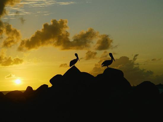 todd-gipstein-two-pelicans-perched-on-rocks-are-silhouetted-against-a-sunset-sky