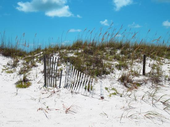 todd-williams-sand-dunes-ii
