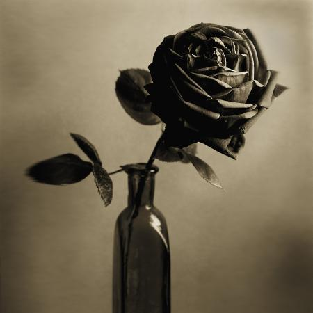 tom-marks-still-life-of-a-rose-in-a-bottle