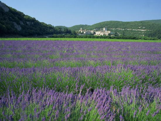 tomlinson-ruth-field-of-lavender-and-village-of-montclus-in-distance-gard-languedoc-roussillon-france-europe