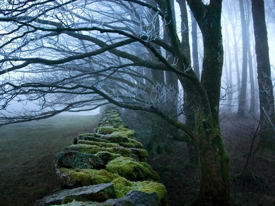 tommy-martin-moss-covered-stone-wall-and-trees-in-dense-fog