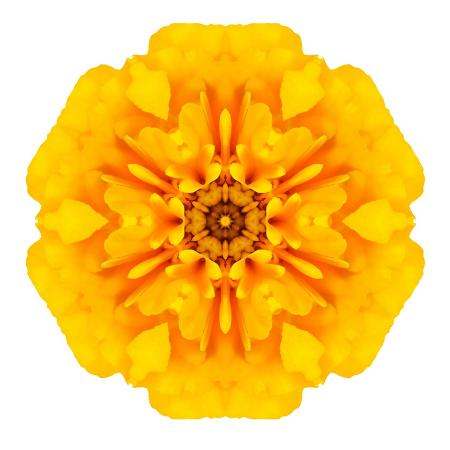 tr3gi-yellow-concentric-marigold-mandala-flower
