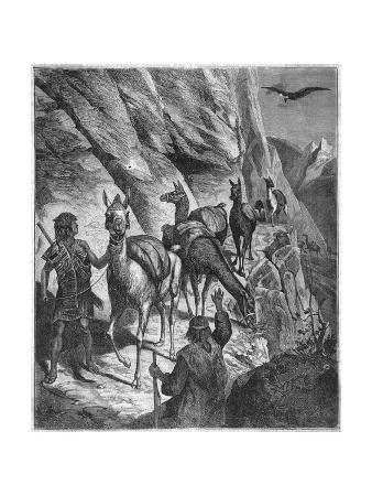 transport-by-llama