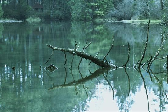 tree-sticking-out-of-water-in-swamp