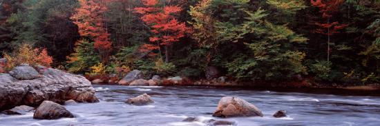 trees-along-a-river-moose-river-adirondack-mountains-new-york-state-usa