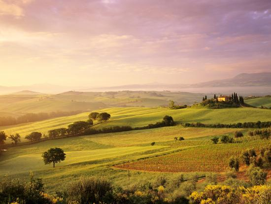 trees-in-a-field-at-sunrise-villa-belvedere-val-d-orcia-siena-province-tuscany-italy