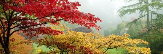 trees-in-a-garden-butchart-gardens-victoria-vancouver-island-british-columbia-canada