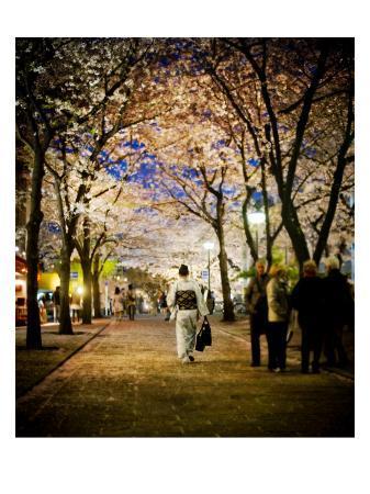 trey-ratcliff-kimono-under-the-cherry-trees