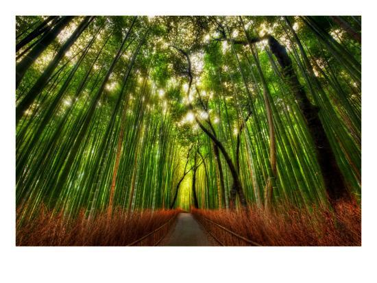 trey-ratcliff-the-bamboo-forest