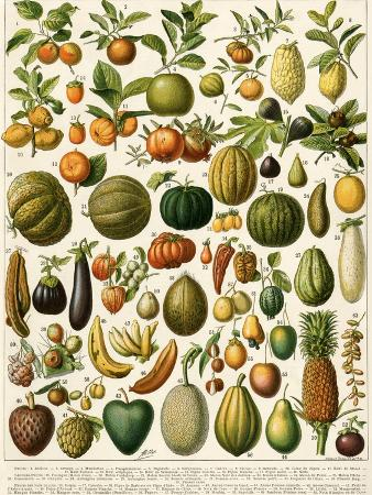 tropical-fruits