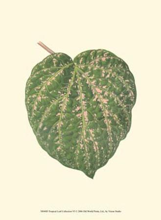 tropical-leaf-collection-vi