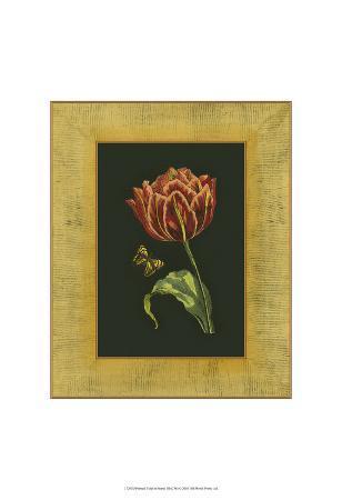 tulip-in-frame-iii