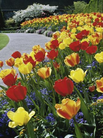 tulips-buchart-garden-victoria-british-columbia-canada