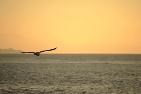 turkey-istanbul-panoramic-of-the-bosphorus-sunset