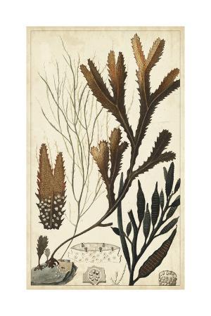 turpin-turpin-seaweed-i