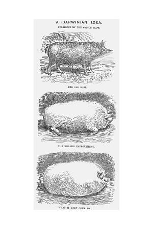tw-woods-a-darwinian-idea-1865