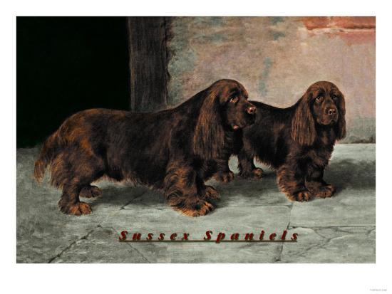 two-champion-sussex-spaniels