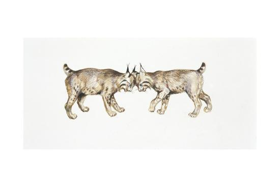 two-eurasian-lynxes-lynx-lynx-head-to-head
