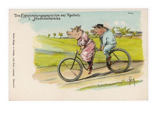 two-happy-pigs-out-for-a-ride-on-their-tandem-bicycle
