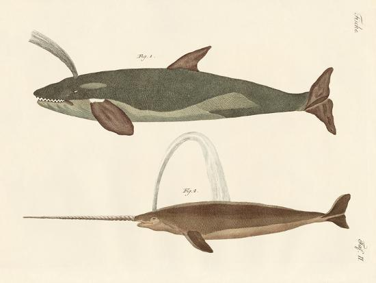 two-kinds-of-whales