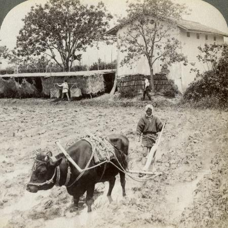 underwood-underwood-ploughing-flooded-ground-for-rice-planting-north-of-the-main-road-at-uji-near-kyoto-japan-1904