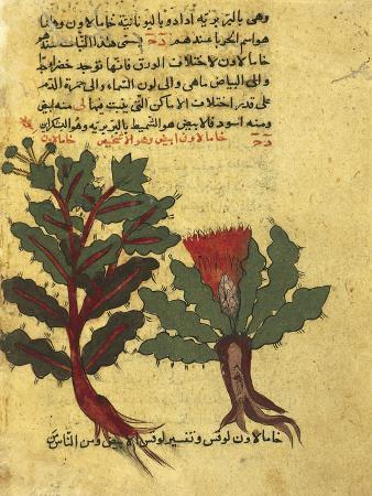 using-herbs-miniature-from-a-work-by-al-ghafiqi-arabic-manuscripts-1582