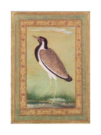 ustad-mansur-indian-lapwing-c-1800