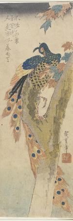 utagawa-hiroshige-peacock-on-maple-tree-early-19th-century
