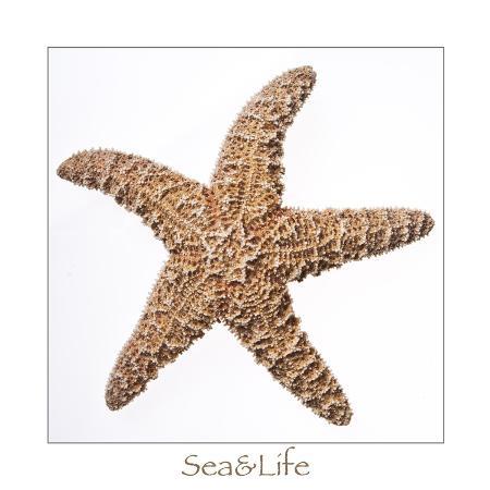 uwe-merkel-maritime-still-life-with-starfish