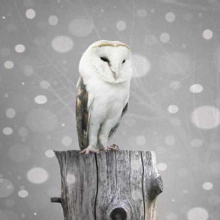 valentina-photos-a-beautiful-barn-owl-above-a-trunk-with-a-abstract-of-snow-and-branches-with-textured-effect