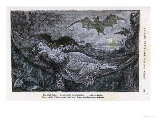 vampire-bat-bites-the-neck-of-a-sleeping-girl-in-as-hammock