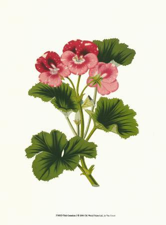 van-houtt-pink-geranium-i