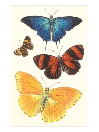 varieties-of-butterfly