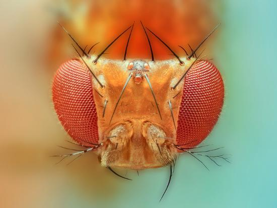 vasekk-macro-insect-spider-bee-stacking-stack-fly-micro
