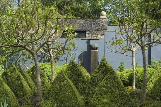 view-across-box-cones-and-fig-trees-to-snail-sculpture-tony-ridler-s-garden-swansea-s-wales-uk