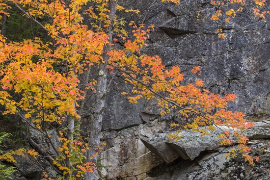 vincent-james-apricot-fall-color-and-granite-design-new-england