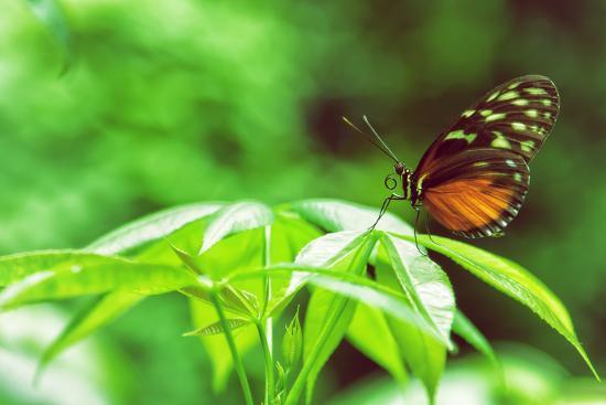 vincent-james-butterfly-works