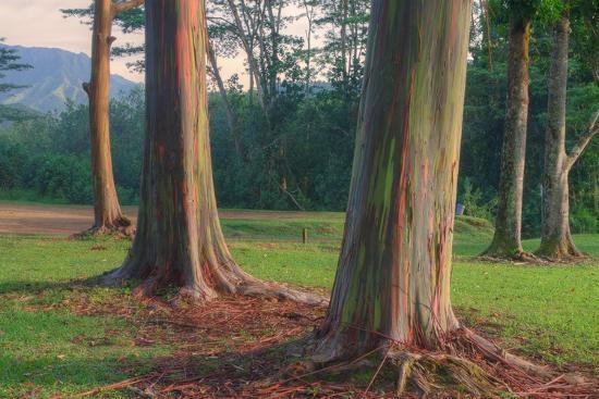 vincent-james-scene-of-rainbow-eucalyptus