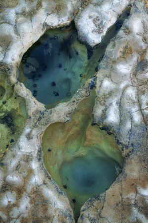 vincent-james-tide-pool-detail
