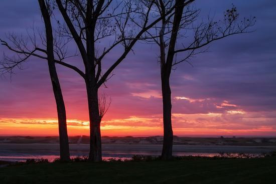 vincent-james-tree-silhouettes-at-sunrise-maine-coast