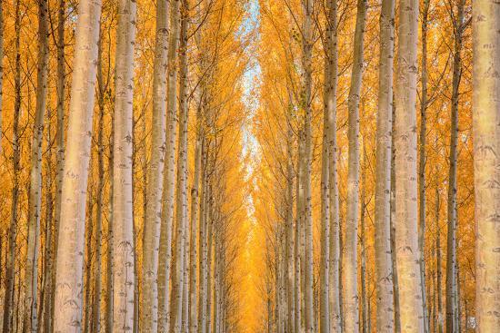 vincent-james-trees-in-waiting-autumn-visions-and-repitition-east-oregon